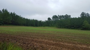 Evans Branch Farm