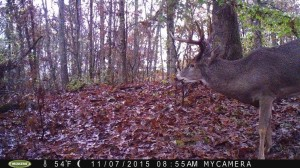 evans branch farm trail cam 01