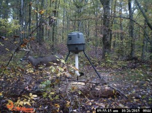 evans branch farm trail cam 02