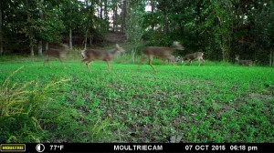 evans branch farm trail cam 03