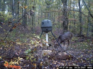 evans branch farm trail cam 04