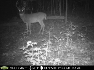 evans branch farm trail cam 05