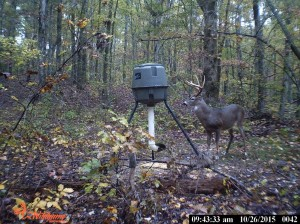 evans branch farm trail cam 06