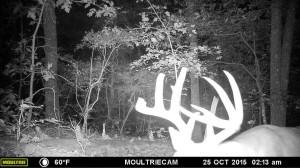 evans branch farm trail cam 07