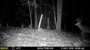evans branch farm trail cam 20
